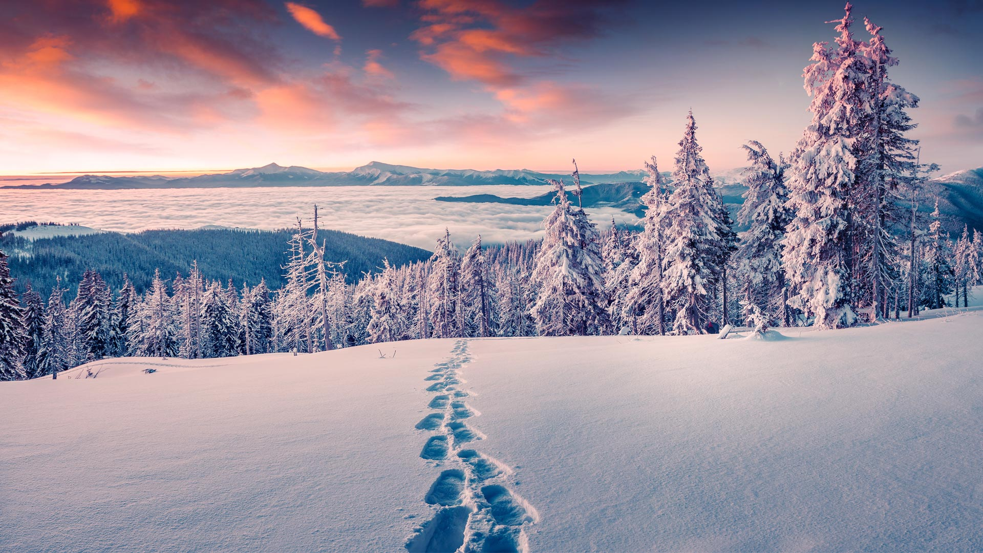 Lake Tahoe winter snowshoe tours and adventures